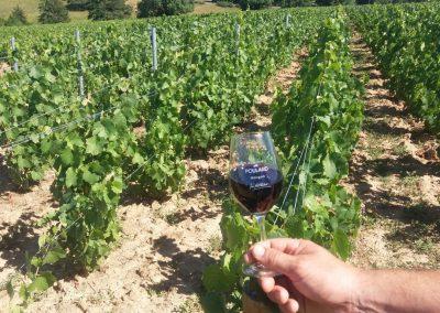 verre vin rouge Beaujolais Morgon